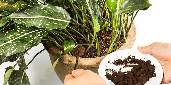 Come usare i fondi di caffé per le nostre piante